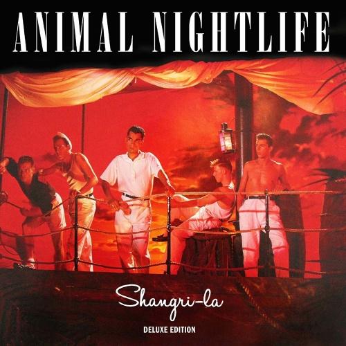 animal-nightlife