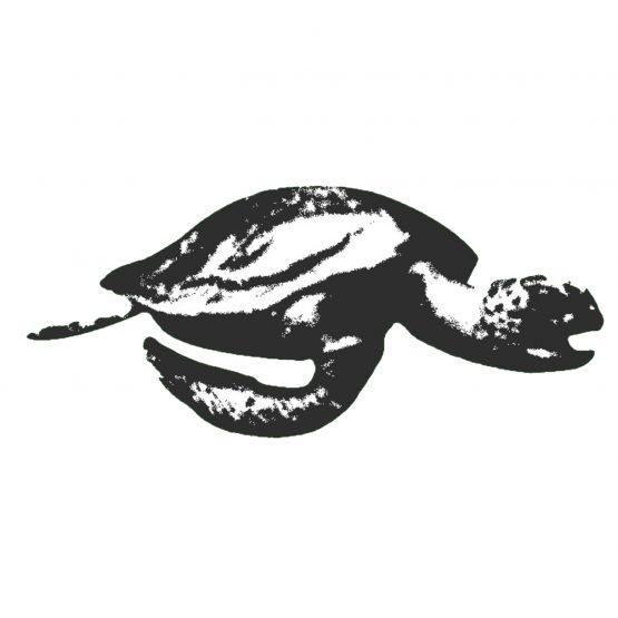 Turtle Records